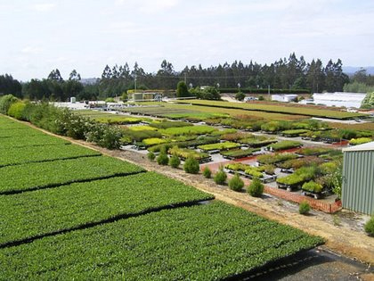 Image result for wholesale plants in nursery